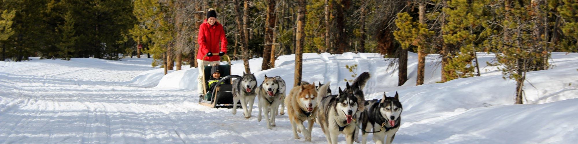 Winter dog sledding in Breckenridge